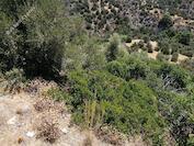 22799 SQM Land in Parekklisia (Limassol) for sale